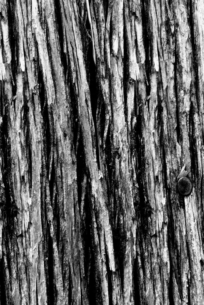 tree-bark-study-no-1-by-john-chavers-1