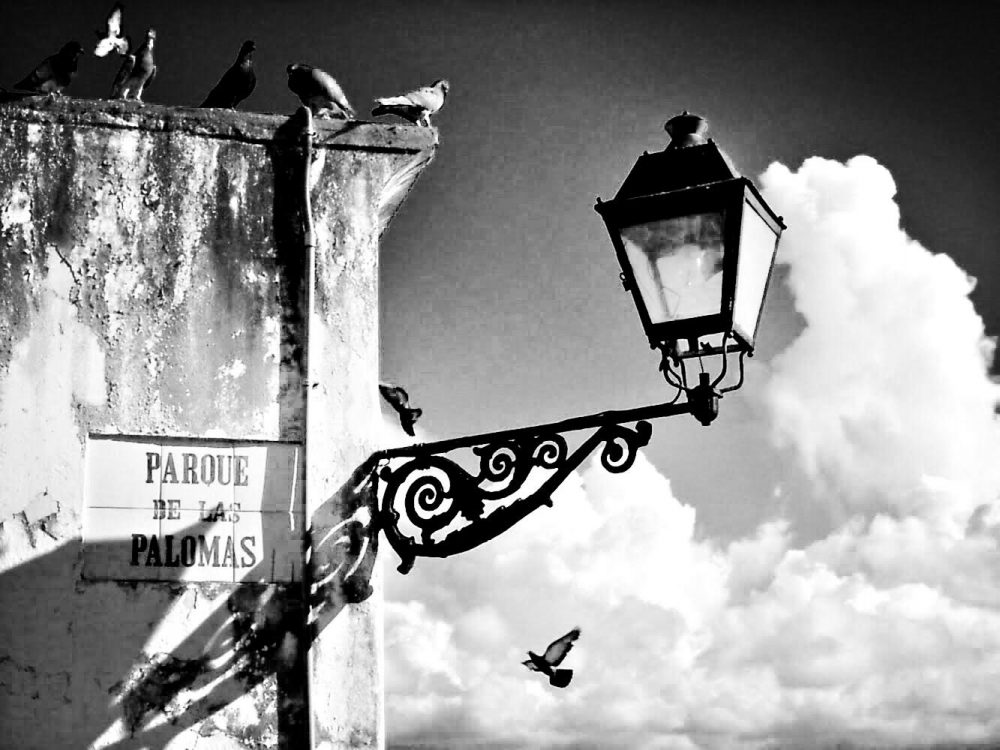 Black and white image of pigeons and lamp post in Puerto Rico